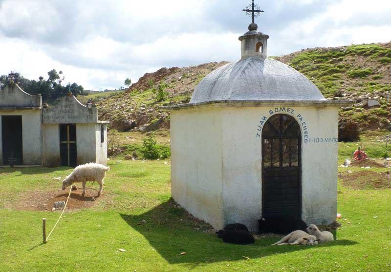 овцы-на-кладбище